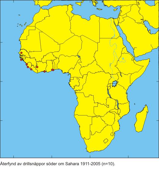 karta afrika ekvatorn Vinterkvarter och återfynd   Naturhistoriska riksmuseet karta afrika ekvatorn