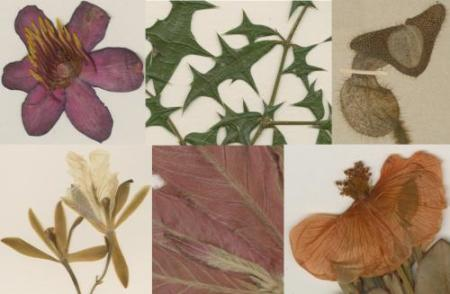 Details of scanned plants