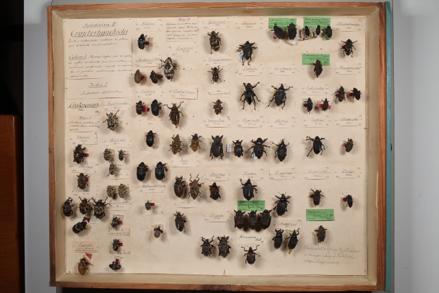 Insects from Schönherr´s collection