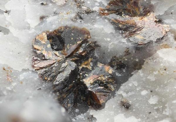 Radiating brown coloured aggregates of the mineral wiklundite, a rare arseno-silicate, in white marble from Långban in south-central Sweden (Photo: Torbjörn Lorin; the width of the image corresponds to 1.5 mm).