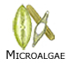 Microscopic algae