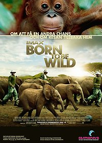 Film-affisch: Born to be wild